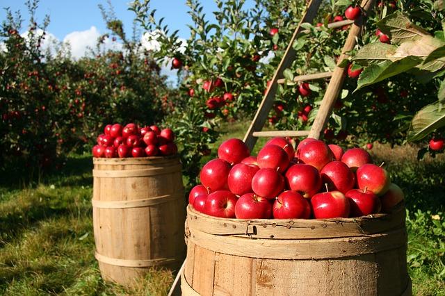 orchard-1872997_640