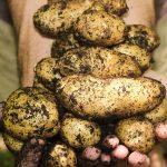 Sejem AGRA: Ekološko kmetijstvo!