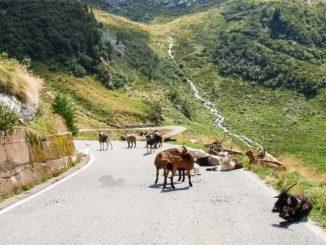 Cesta, ki vodi v Alpsko mesto leta 2019