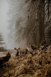 An unexpected meeting. © JUSTYNA ZDUŃCZYK, POLJSKA