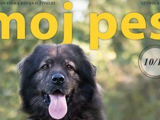 Foto: Revija Moj Pes