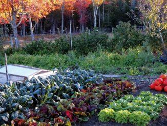 zelenjavni vrt jesen