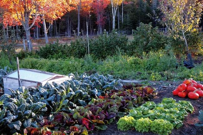 Jesenska opravila v zelenjavnem vrtu
