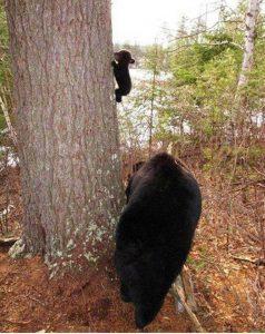 Prvo plezanje na drevo ...