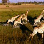 Končno nekaj dobrega v zvezi z droni – v Afriki ščitijo živali