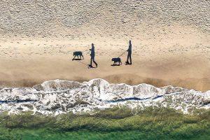 """2 people, 2 dogs & 4 shadows"", Gliebin"