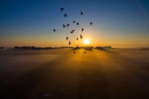 """Birds, Lubin, Poland"", Dron Expert"