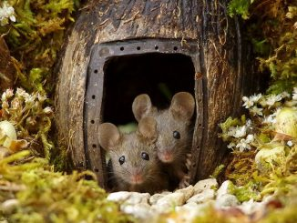 miniature-mice-family-simon-dell-1