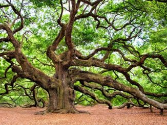 nenavadna-drevesa