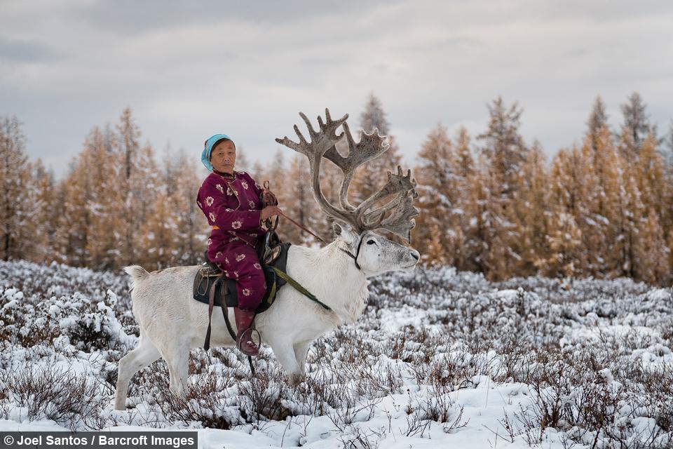 Na čelu družine Ganbaa, ki živi v šotoroh, takoimenovanih 'tipijih', je Purev.