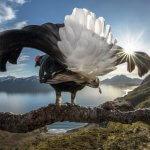 Natečaj BigPicture Natural World: Najlepše fotografije narave
