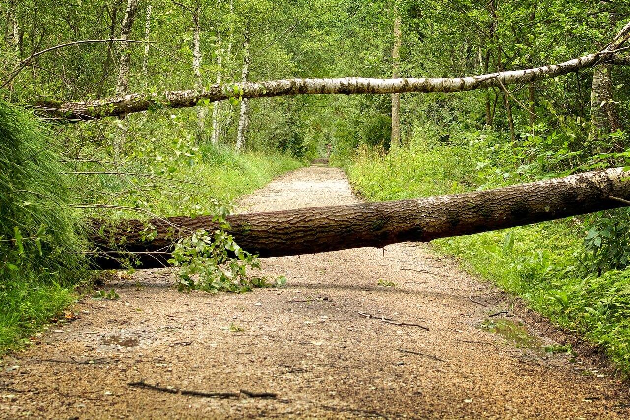 Naravne ujme močno vplivajo na poslovanje gozdarjev