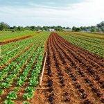 Pametne vasi lahko prispevajo k boljši samooskrbi s hrano