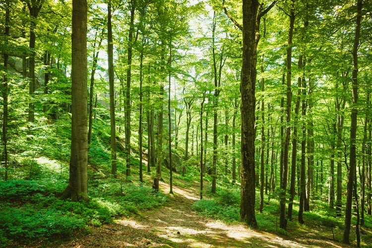Gospodarjenje z gozdovi kot pomembno družbeno vprašanje
