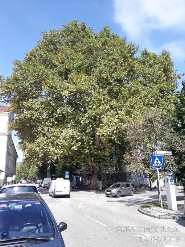 V Ljubljani izbrali drevo leta 2019