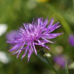 PlantNet - aplikacija za prepoznavanje rastlin