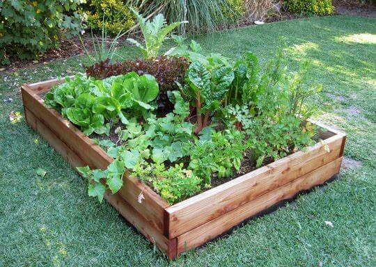 9 praktičnih nasvetov za majhen vrt s čim več pridelki
