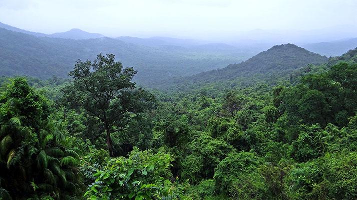 V amazonskem deževnem gozdu bodo posadili 73 milijonov novih dreves