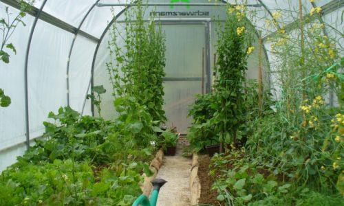 Hobi rastlinjak za vsako gospodinjstvo