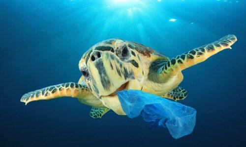 Svetovni dan okolja: plastika