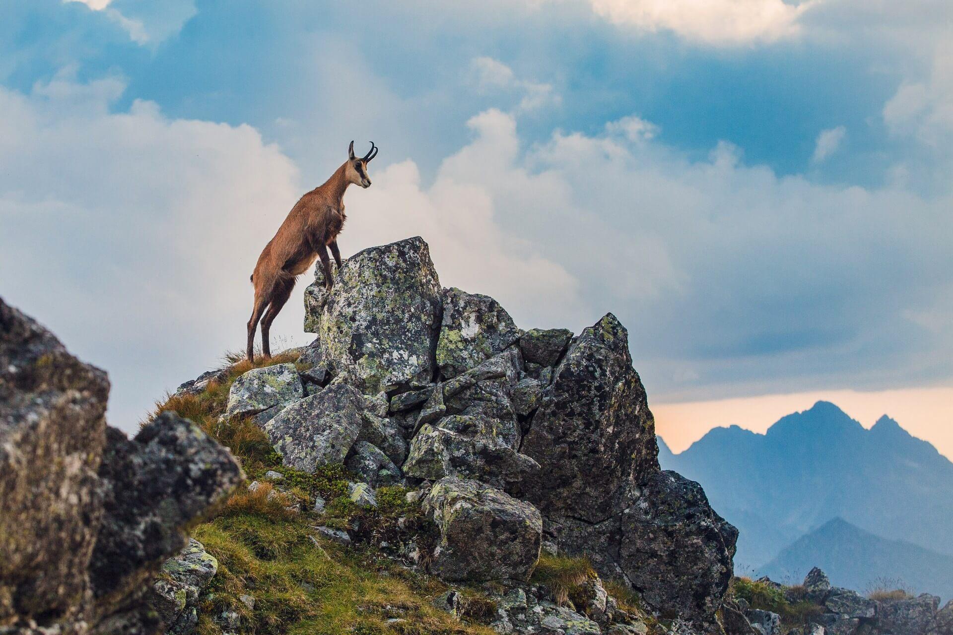 Kako divja in naravno bogata je Slovenija?