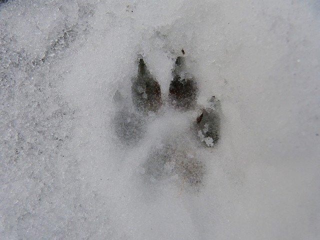Sledenje živalim v naravi Triglavskega narodnega parka