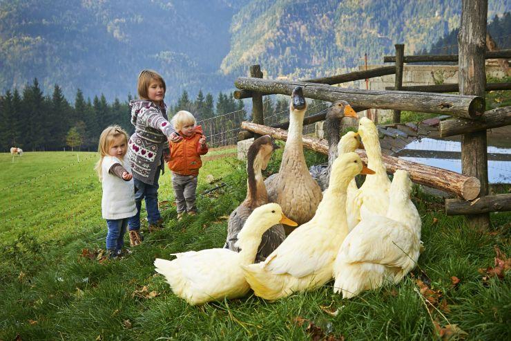 Počitnice malo drugače: izlet na kmetijo po energijo!