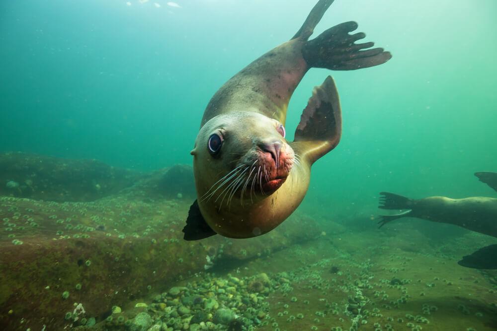 Svetovni dan oceanov: zaščitimo življenjska okolja morskih organizmov