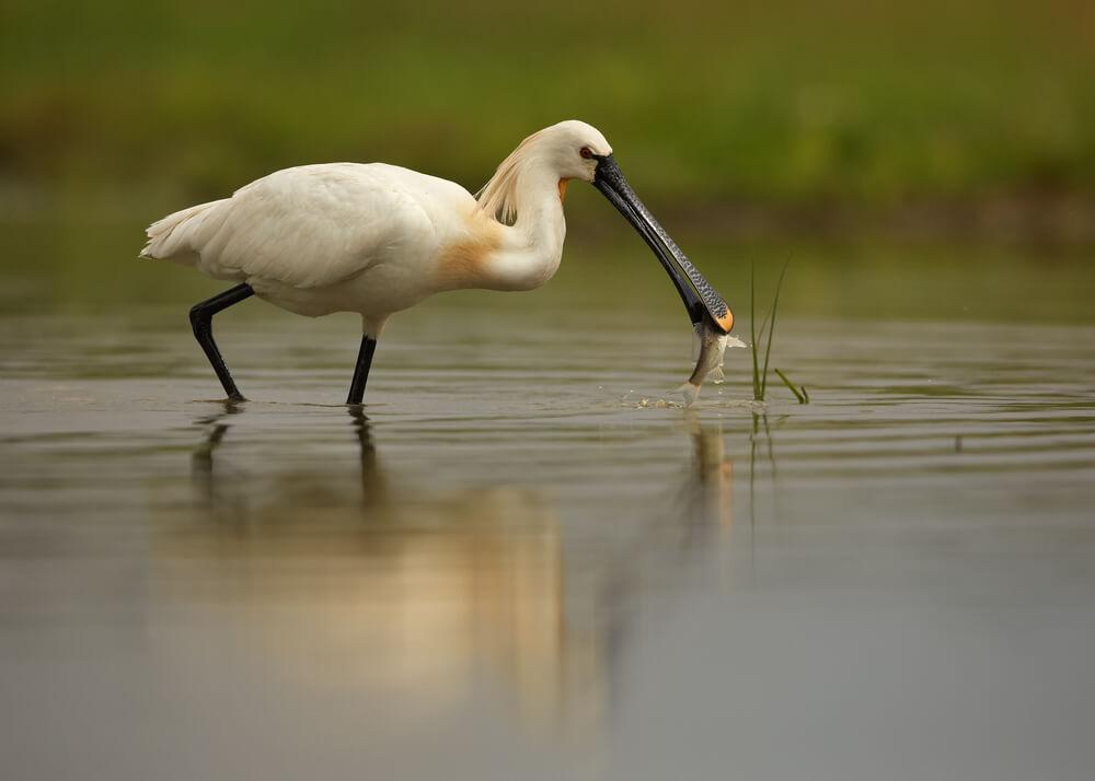 Naravni rezervat Ormoške lagune med finalisti evropske nagrade Natura 2000