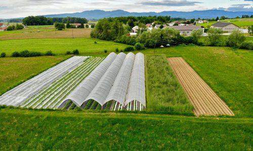 Slovenska kmetija Černelič navdušila evropsko javnost