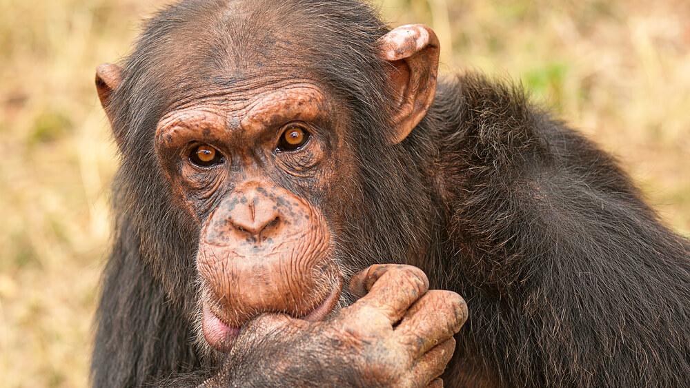 Jane Goodall poziva k spremembi (prehranskih) navad