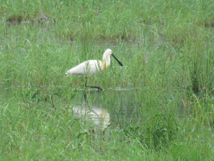 Dnevi odprtih vrat v Naravnem rezervatu Ormoške lagune