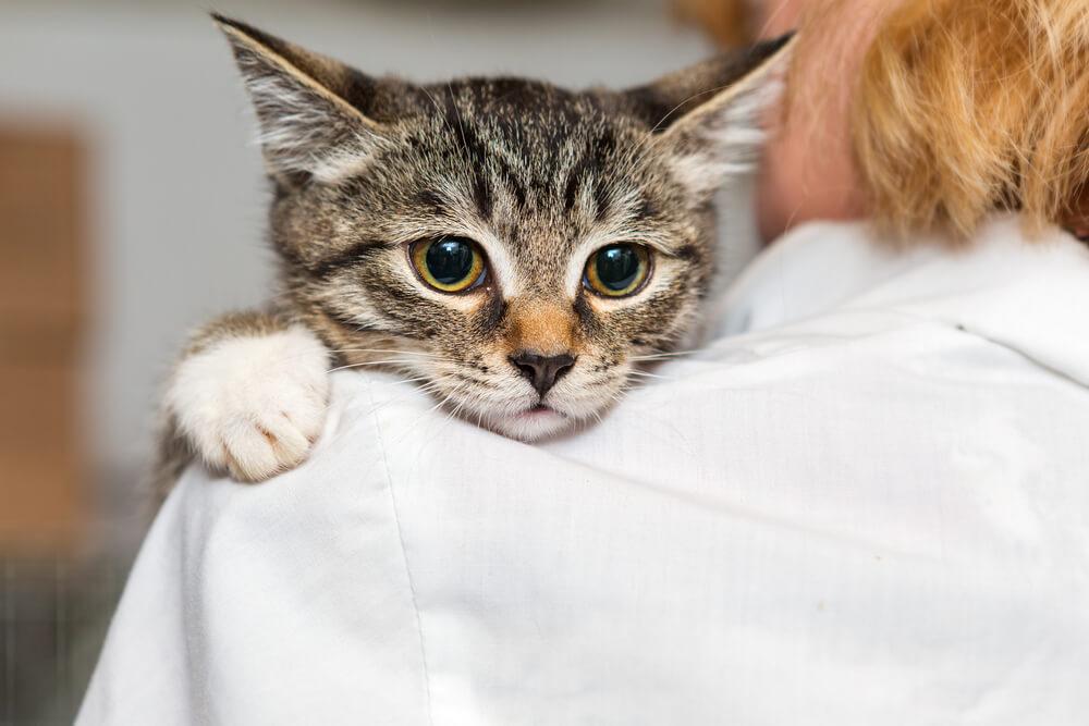 Kako je ena ženska pred smrtjo rešila 565 psov in mačk?