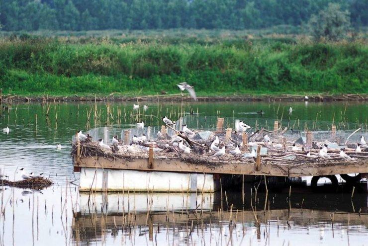 Ormoške lagune postale naraven rezervat