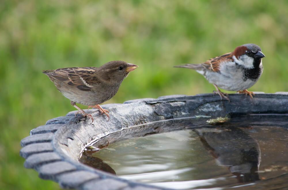 Ptice potrebujejo vodo - pomagajmo jim