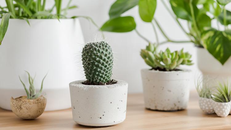 Najboljše sobne rastline za začetnike