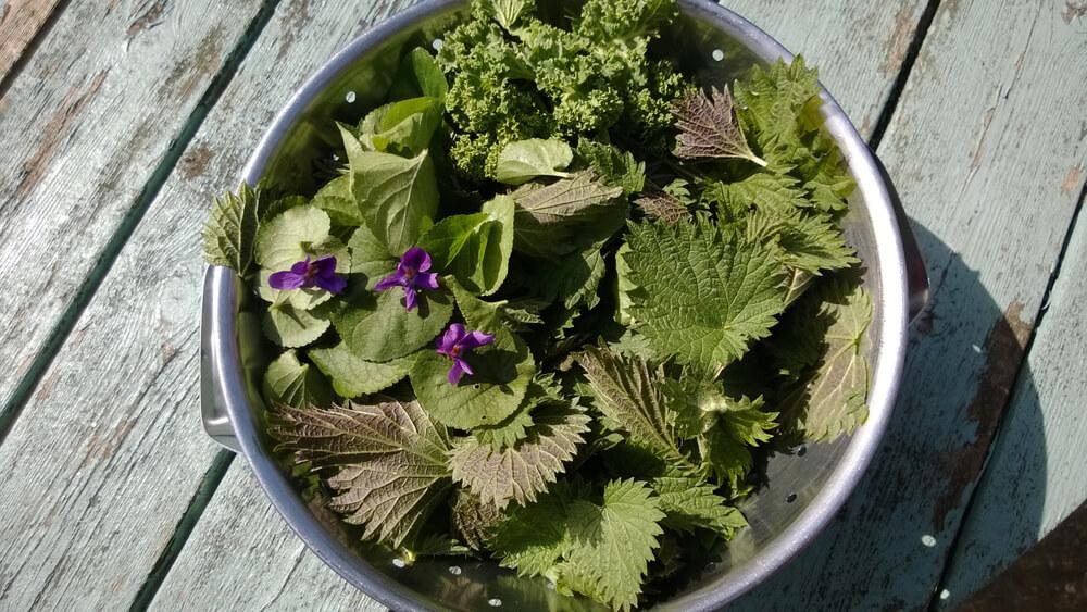 Plevel v kuhinji: 7 vrst plevelov, ki so užitni