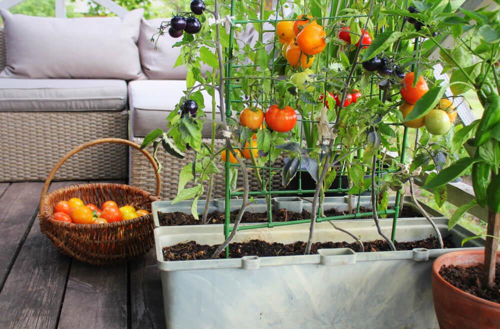 Vrt v loncih - na balkonu, okenski polici ali na strehi!