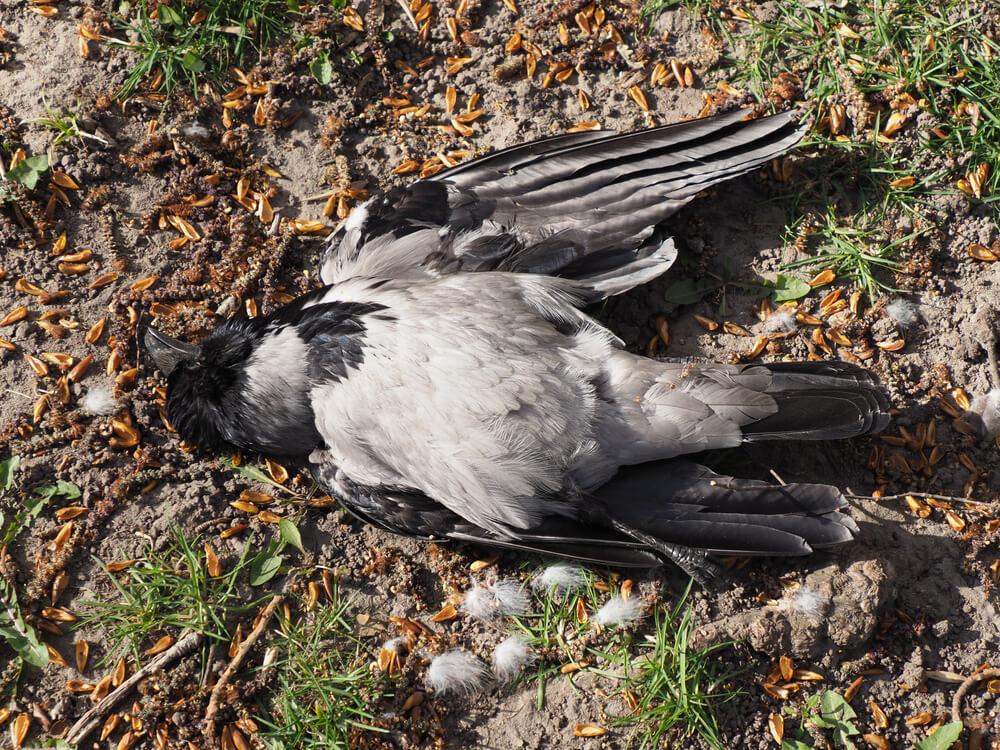 Populacije ptic v Evropi se zmanjšujejo