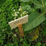 Zeliščni vrt Majnika, foto: Petra nastran