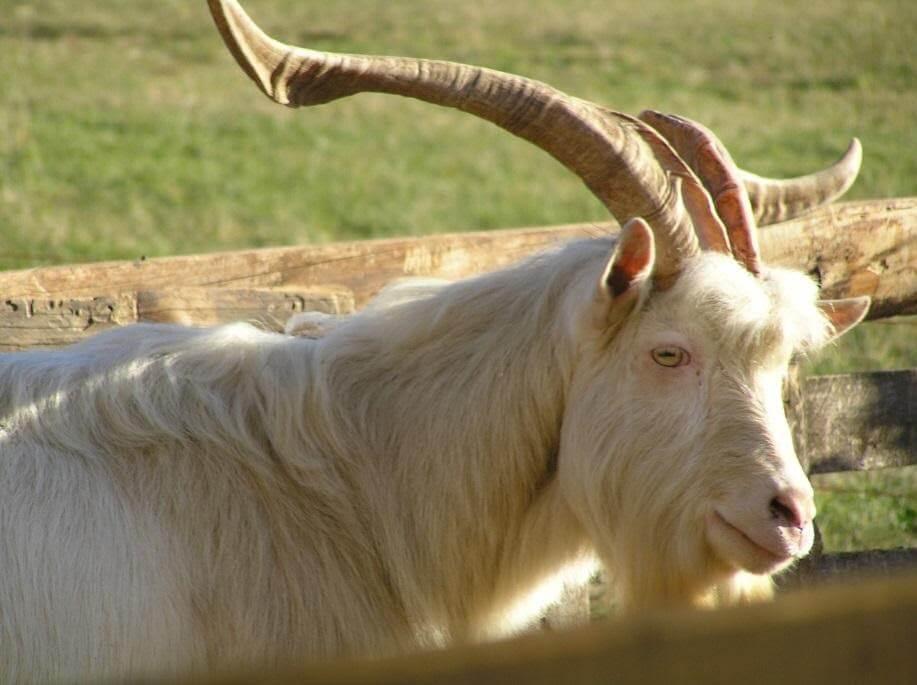 Izšla je dopolnjena zgibanka kmetij insredišč slovenskih avtohtonih pasem domačih živali