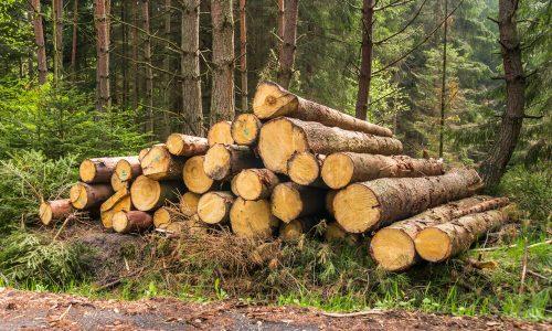 Odprta dva razpisa za sanacijo škode v gozdovih