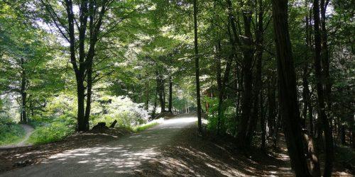Gremo na Golovec, v gozd sredi mesta!