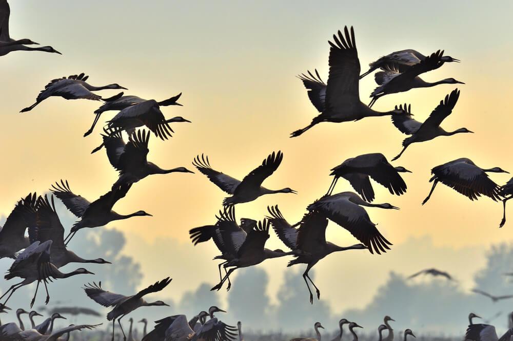 Selitve ptic - neverjetna potovanja s številnimi nevarnostmi