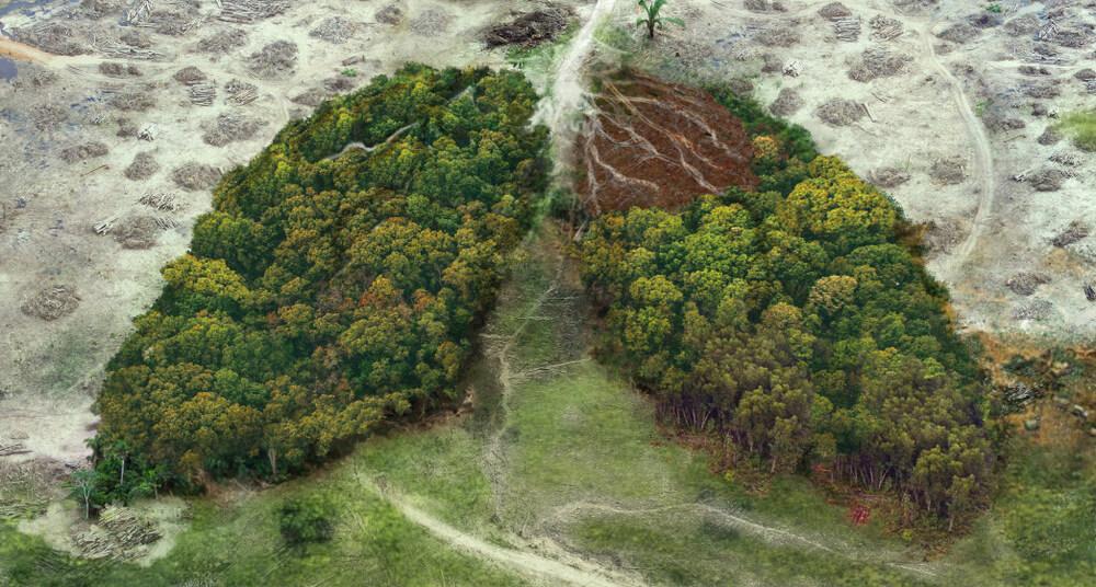 Krčenje in uničevanje gozdov bo prineslo še več pandemij