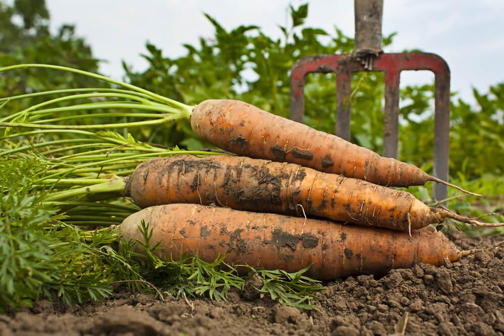 Slovenski poziv k zelenemu okrevanju kmetijstva v EU
