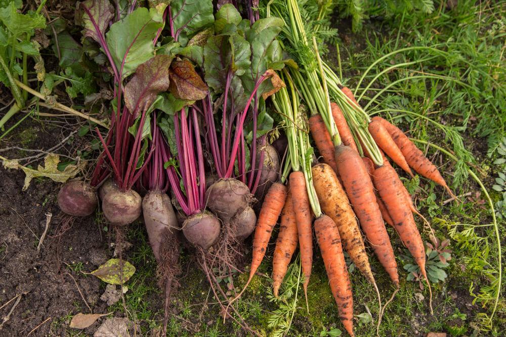 Katero zelenjavo gojimo jeseni?