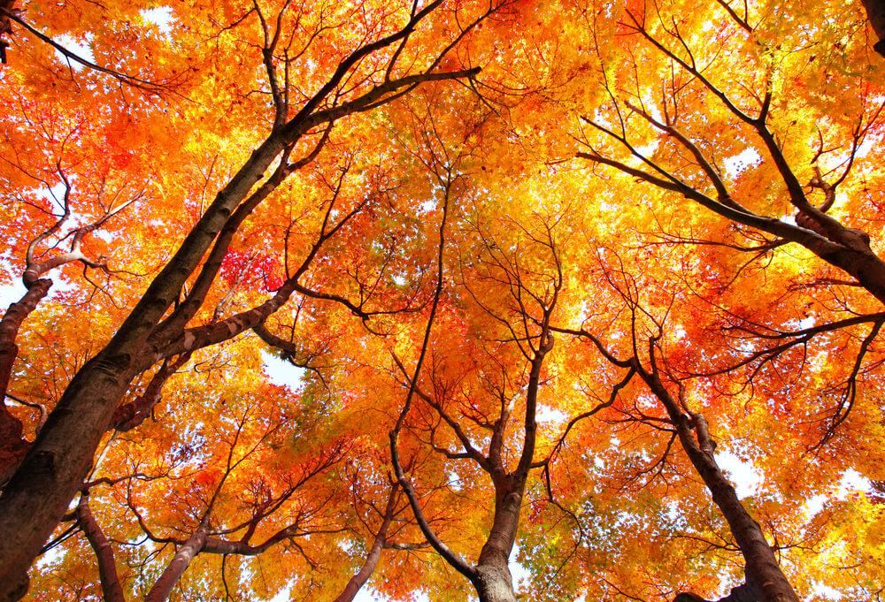 Lahko se naučimo slišati, kako se drevesa pogovarjajo med seboj