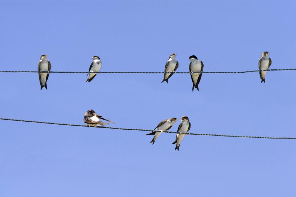 V času selitev imamo najlepšo priložnost za opazovanje ptic