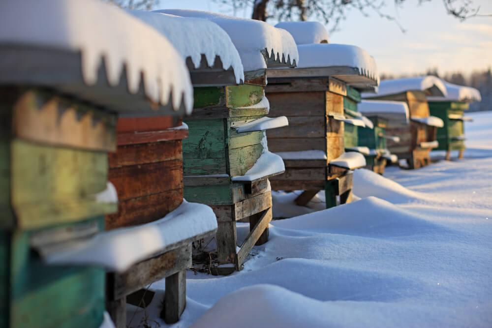Kako čebele preživijo zimo?